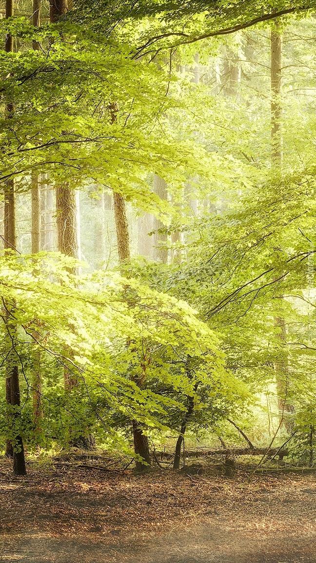 Drzewa i gałęzie w lesie