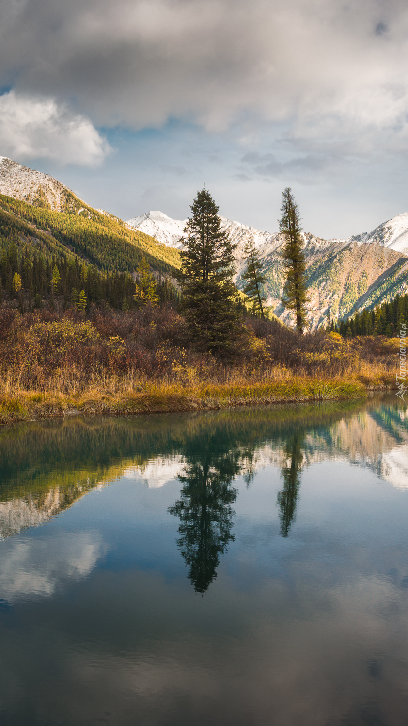 Drzewa i góry Ałtaj nad rzeką