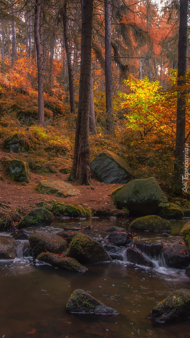 Drzewa i kamienie nad rzeczką