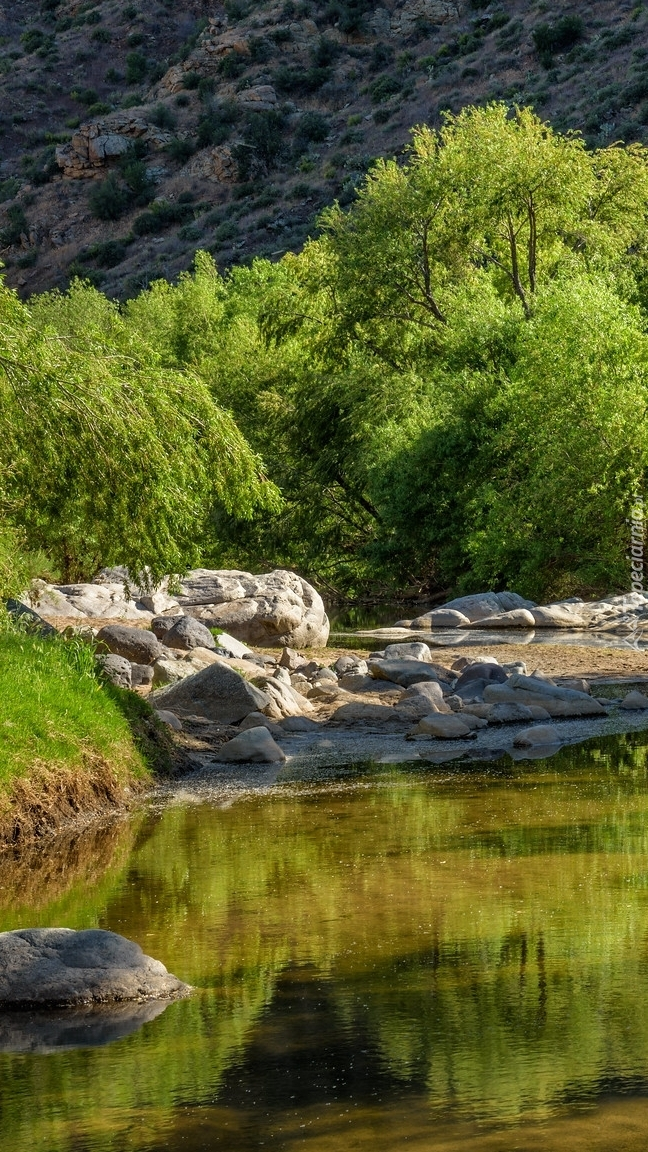 Drzewa i kamienie nad rzeką