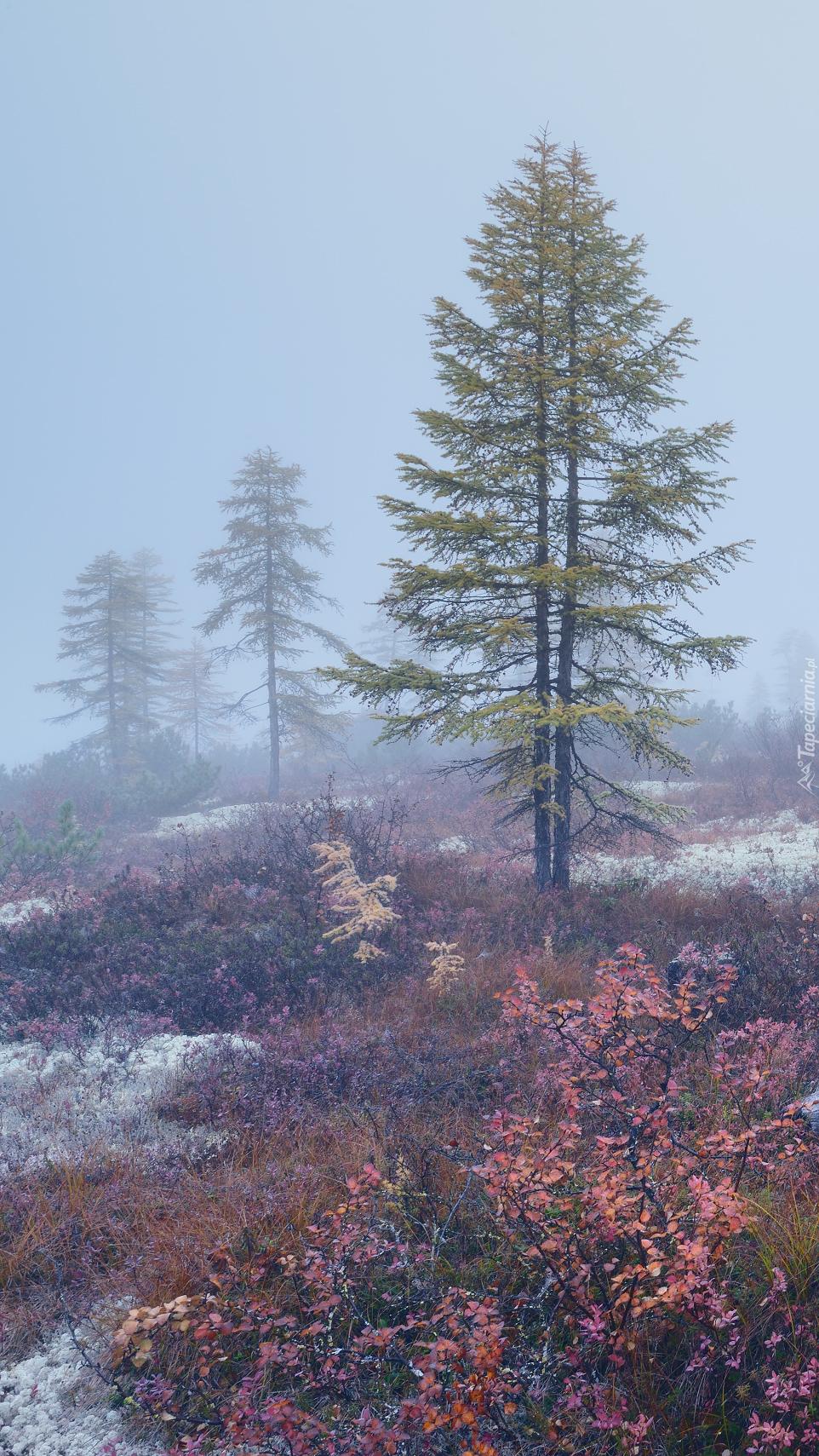 Drzewa i kolorowa roślinność we mgle
