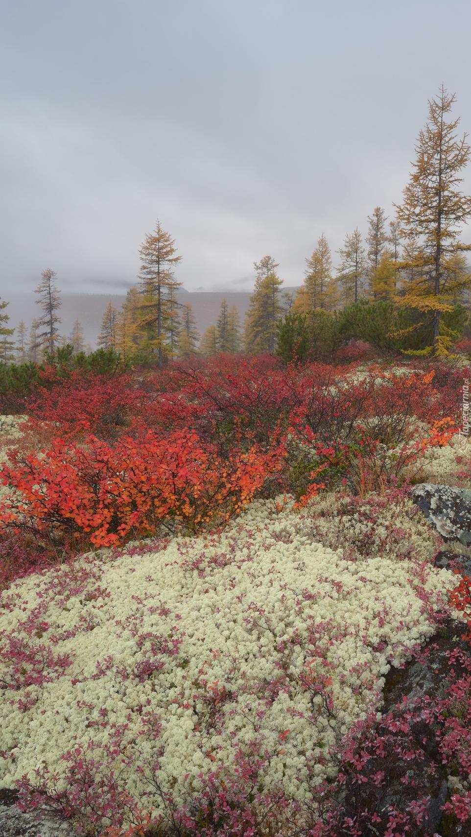 Drzewa i kolorowe rośliny