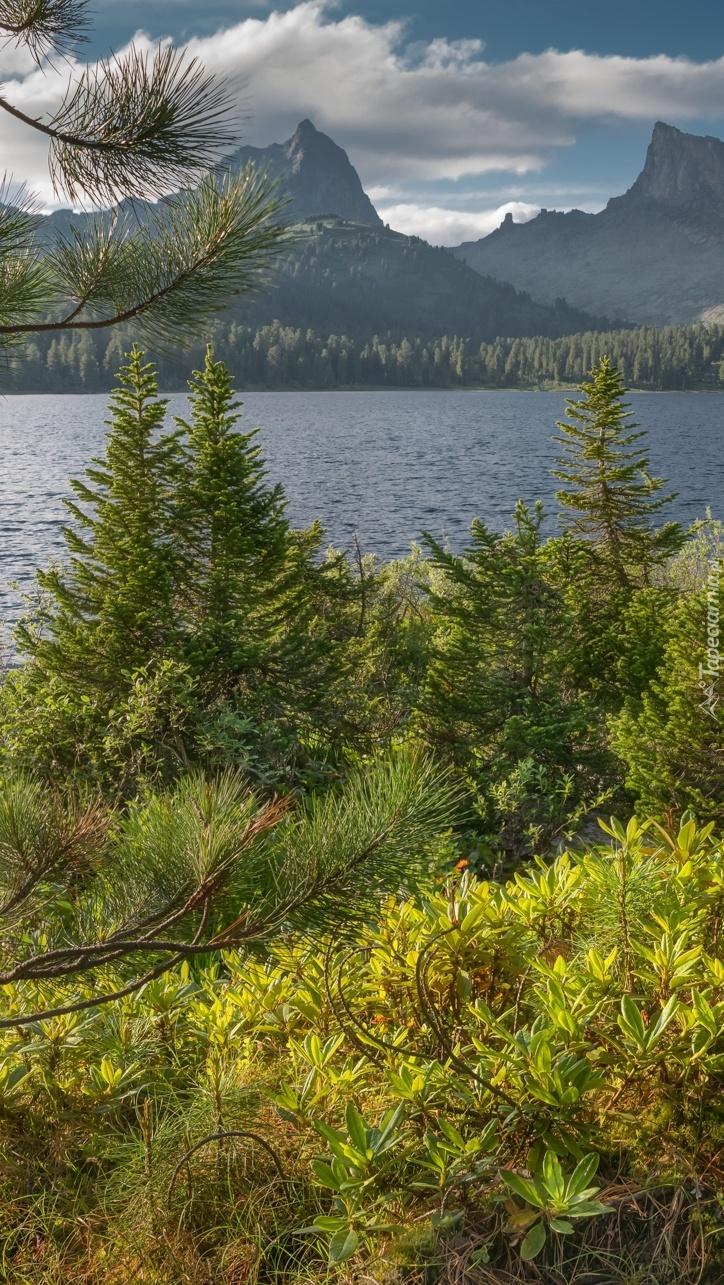 Drzewa i krzewy na brzegu jeziora