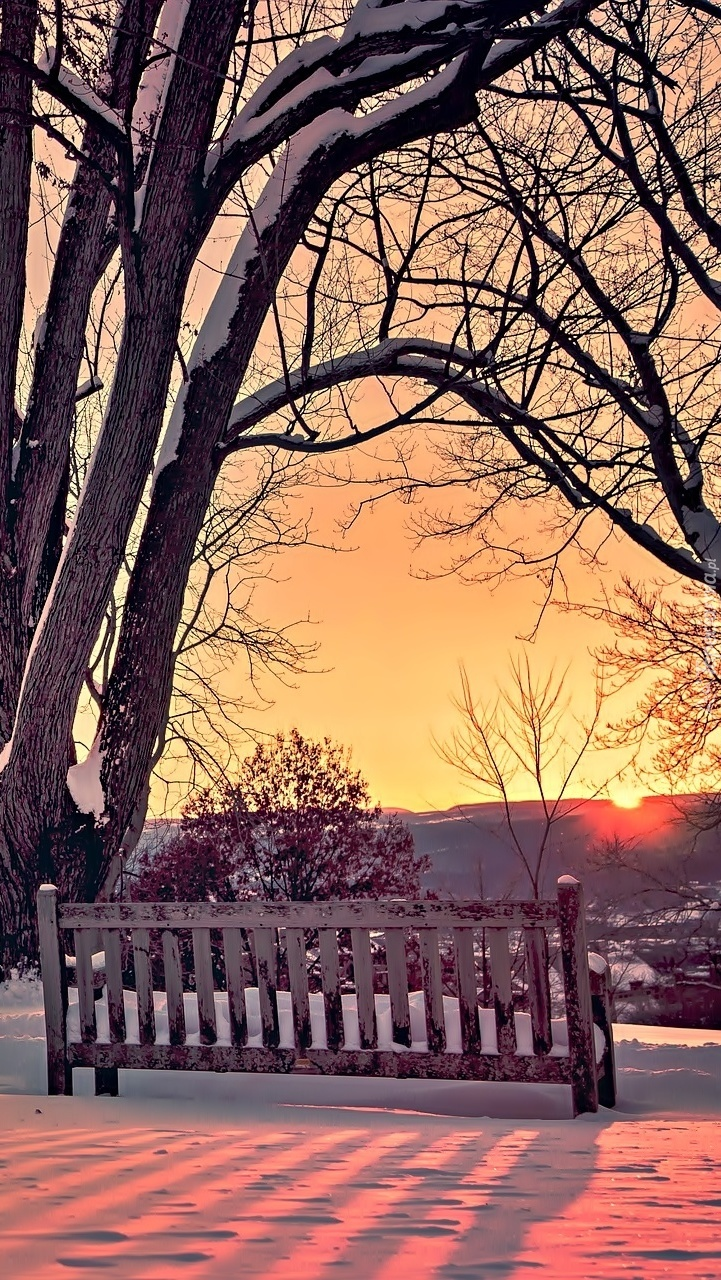Drzewa i ławeczka zimą o zachodzie słońca
