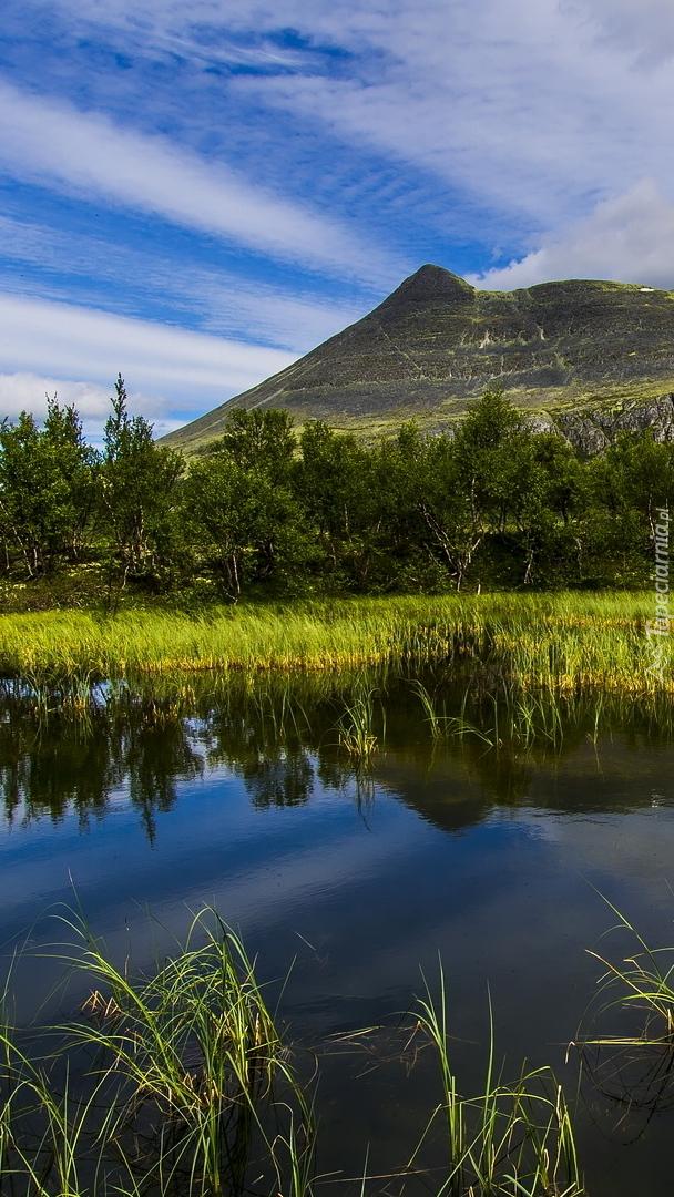 Drzewa i roślinność nad jeziorem w górach