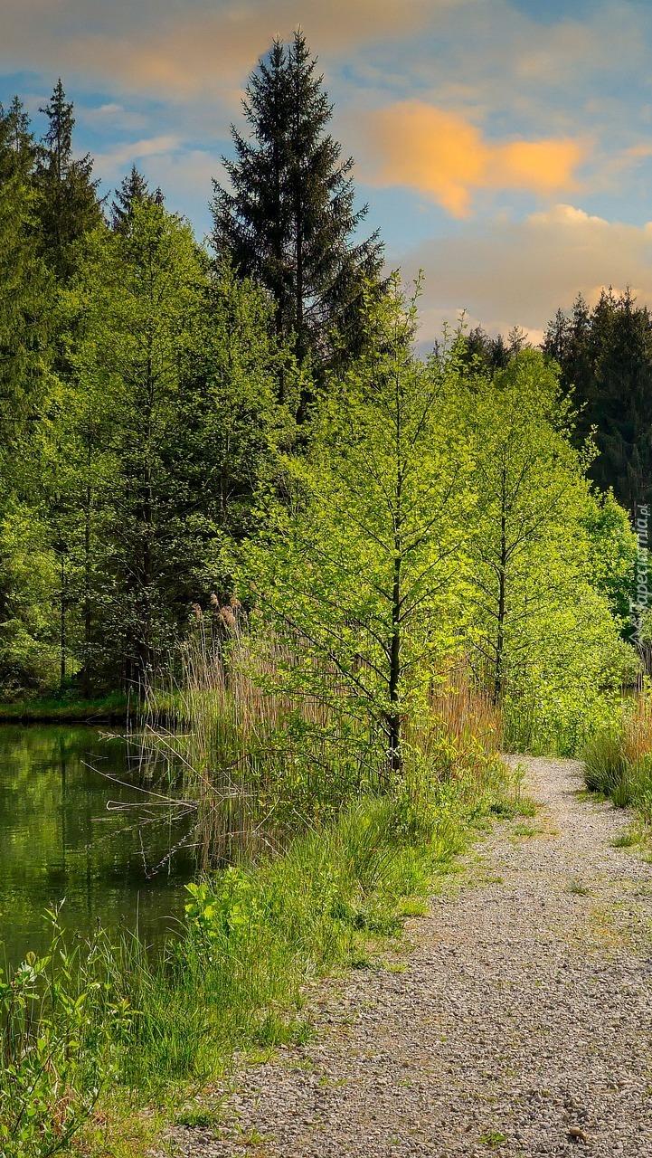 Drzewa i ścieżka nad jeziorem