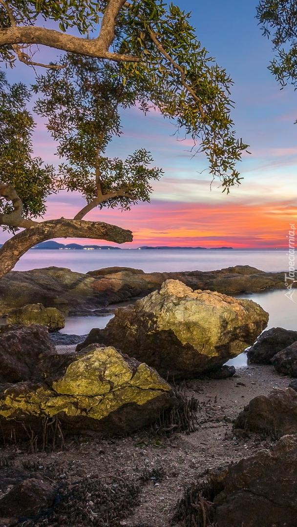 Drzewa i skały nad Zatoką Tajlandzką