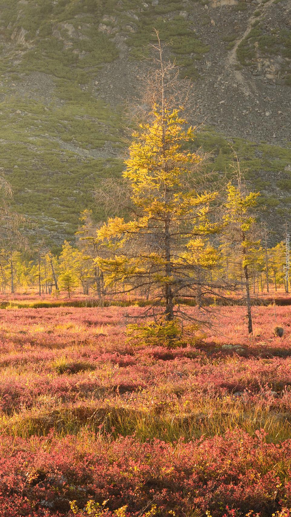 Drzewa i trawy jesienią