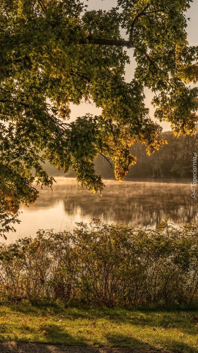 Drzewa i trawy nad jeziorem