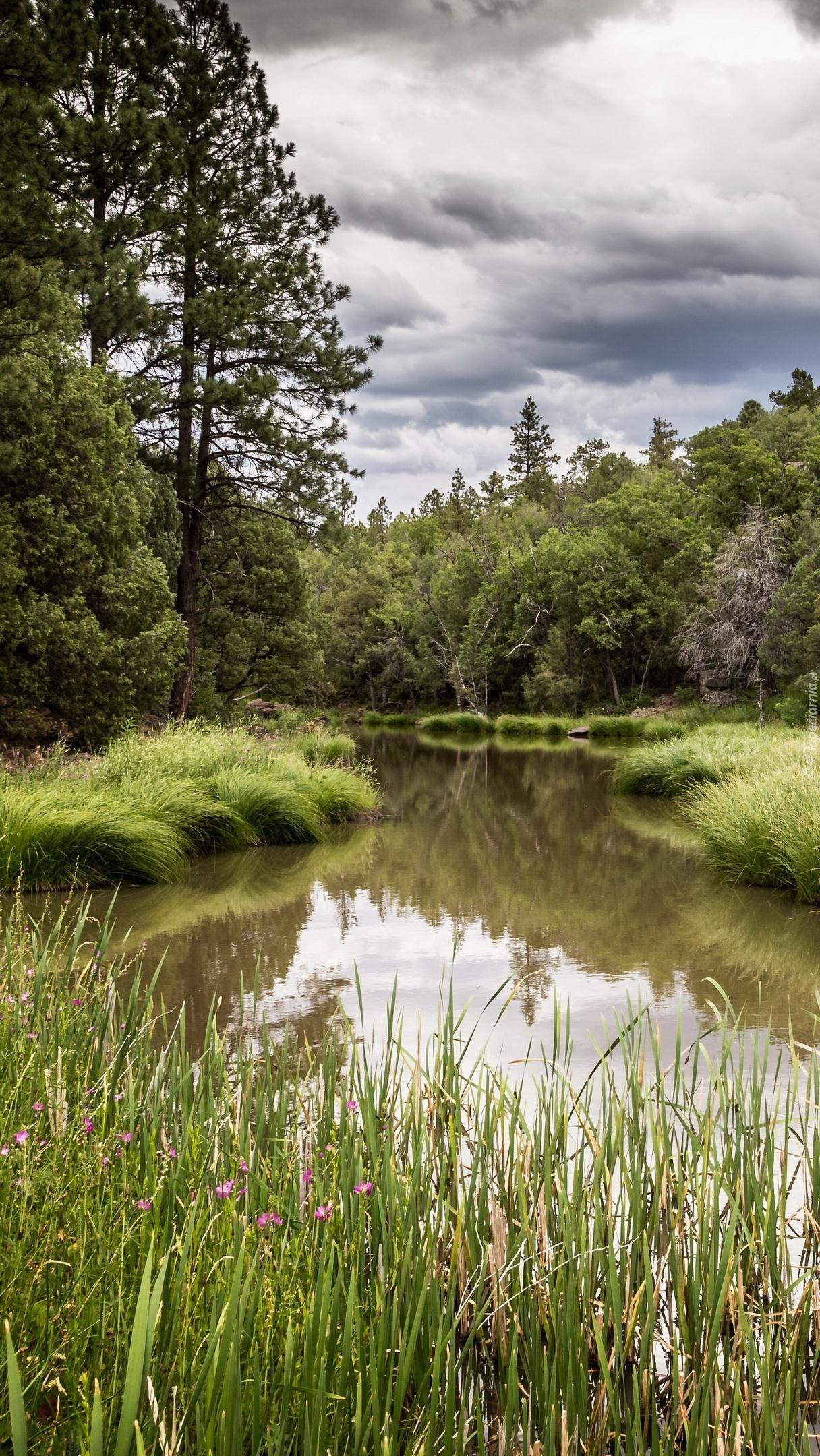 Drzewa i trawy nad rzeką