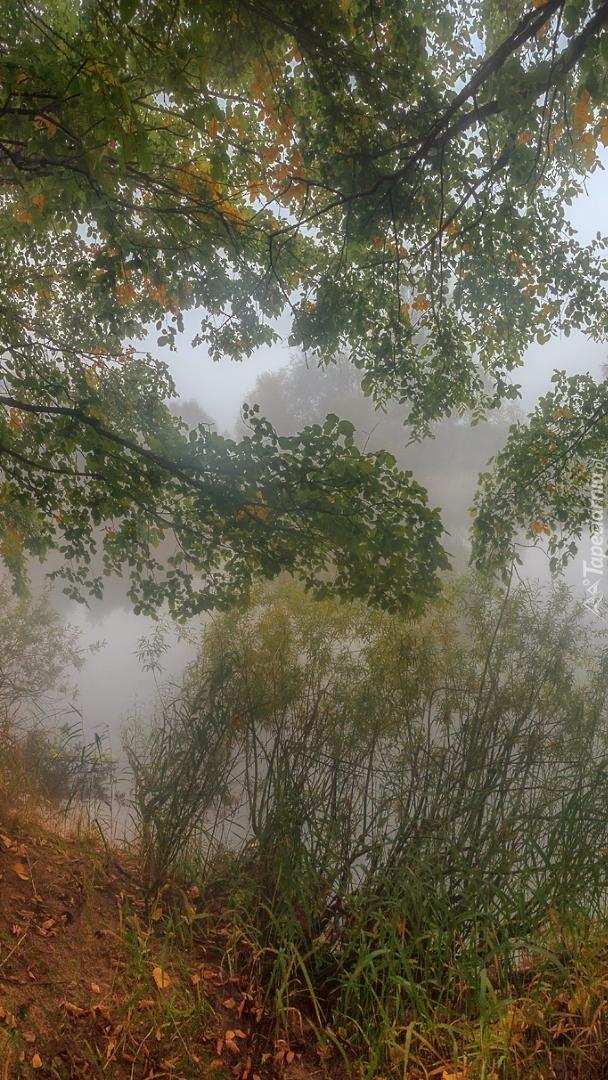 Drzewa i trawy nad zamglonym jeziorem