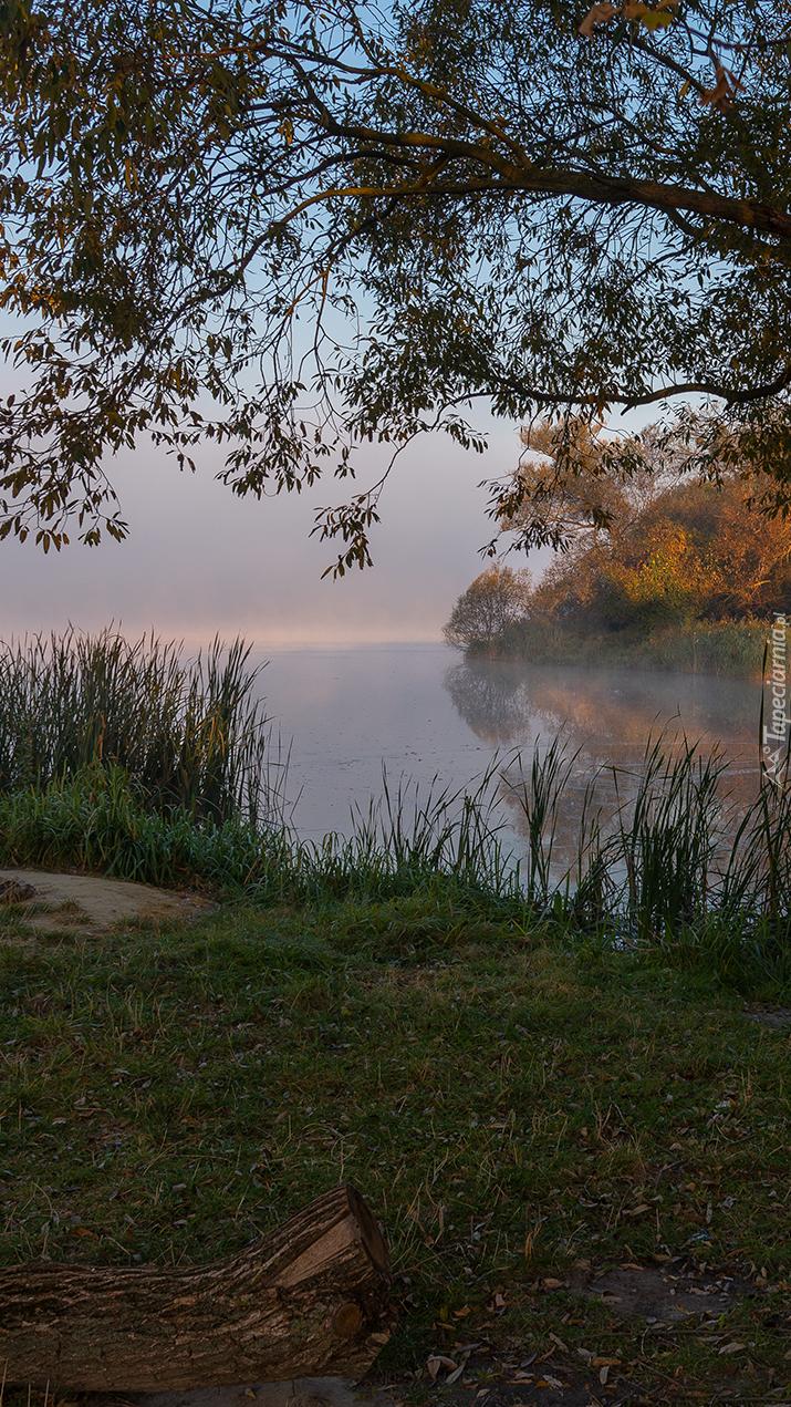 Drzewa i trzciny nad jeziorem
