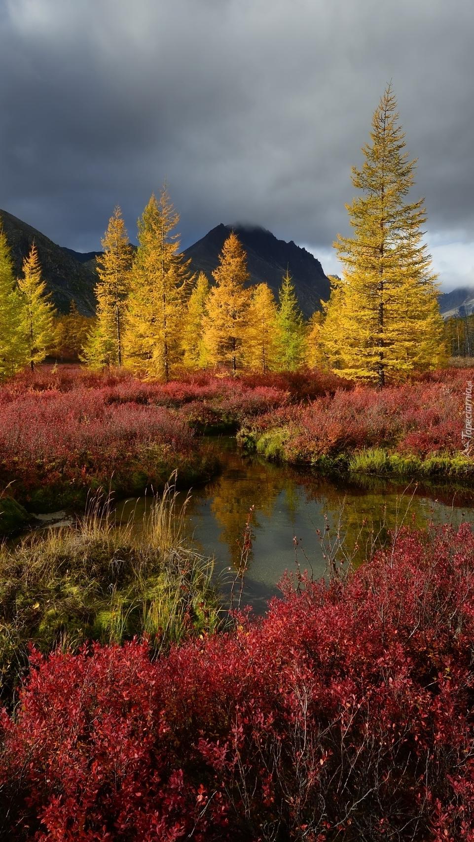 Drzewa jesienną porą nad wodą