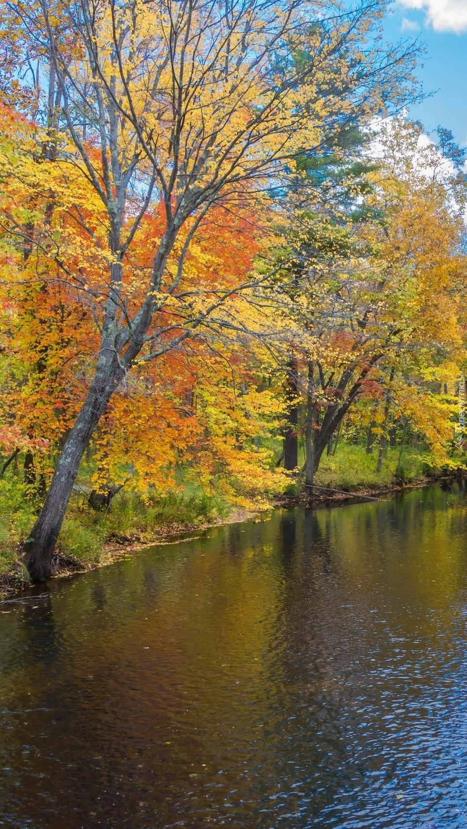 Drzewa jesienne nad rzeką