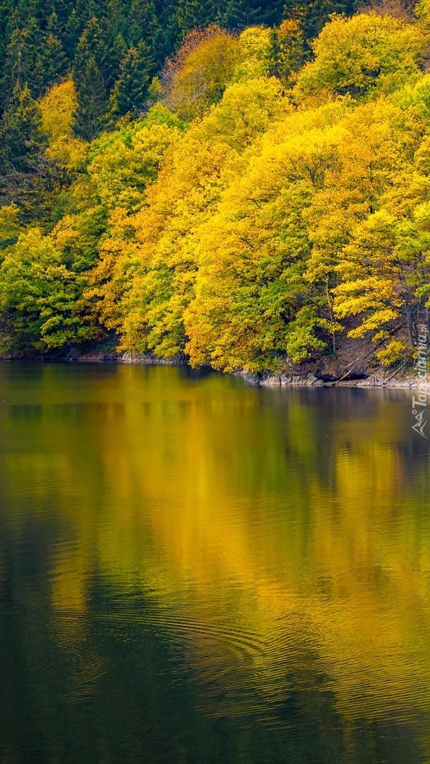 Drzewa liściaste nad jeziorem