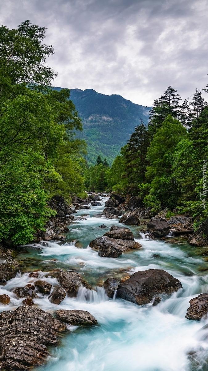 Drzewa na brzegach rwącej rzeki