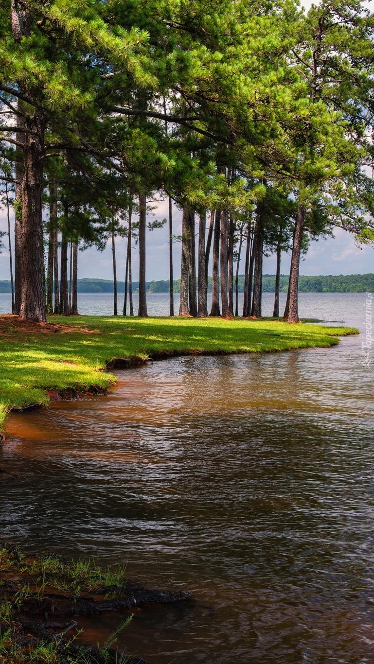 Drzewa na brzegu jeziora