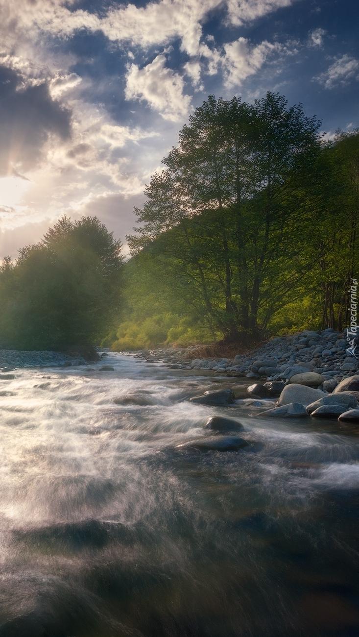 Drzewa na brzegu kamienistej rzeki