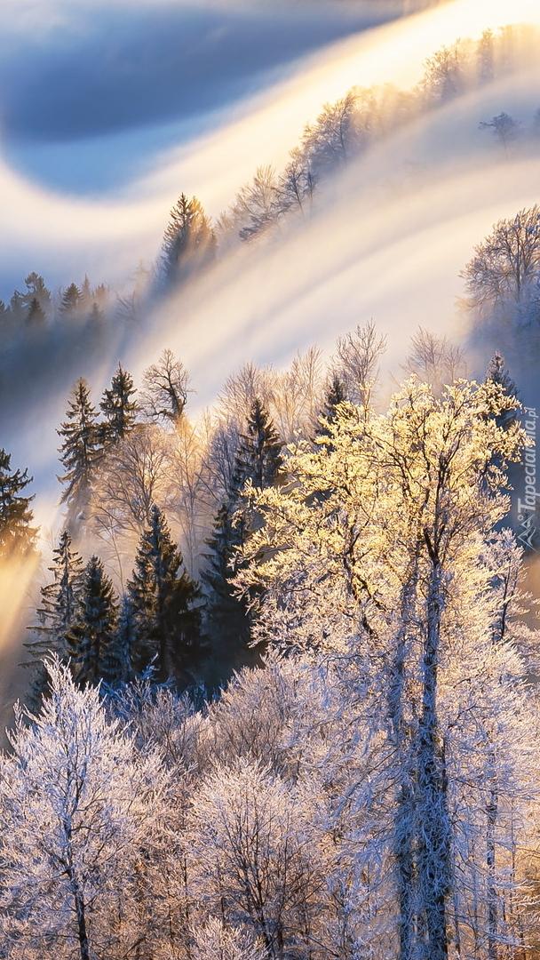 Drzewa na górze we mgle