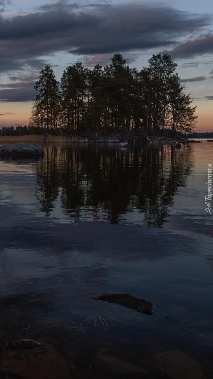 Drzewa na jeziorze o zmierzchu