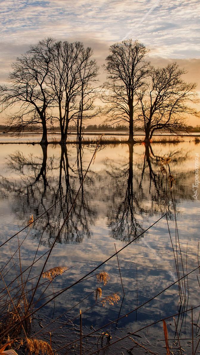 Drzewa na jeziorze