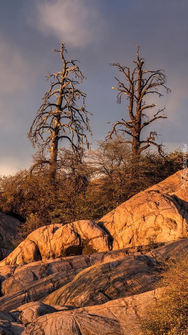 Drzewa na skałach