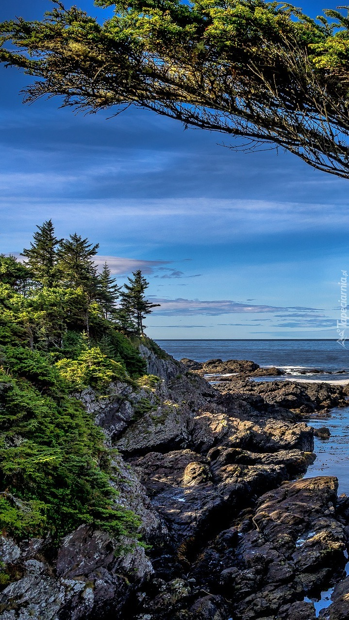 Drzewa na skałach nad morzem