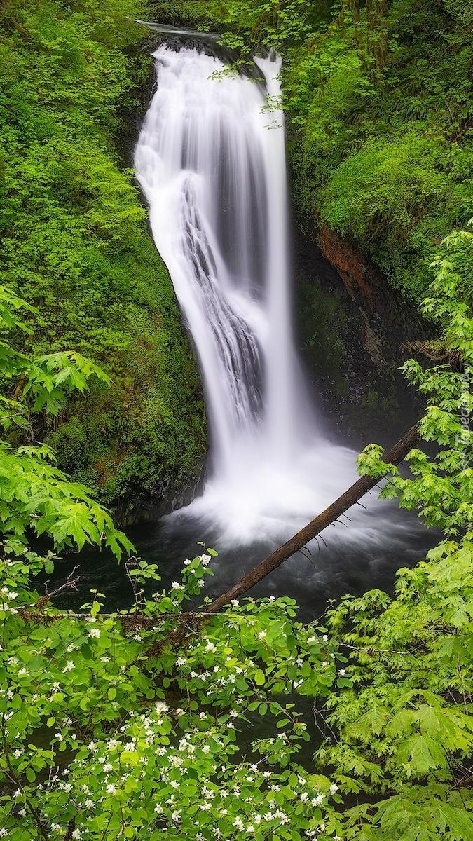 Drzewa na skałach przy wodospadzie