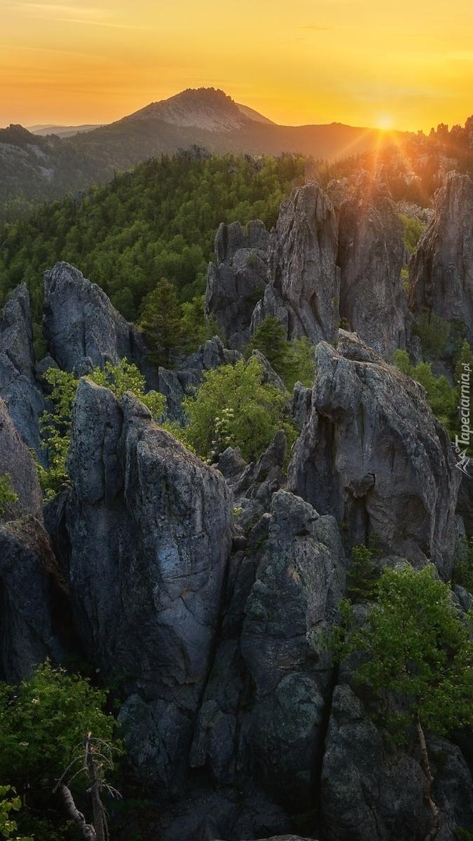 Drzewa na skałach w górach