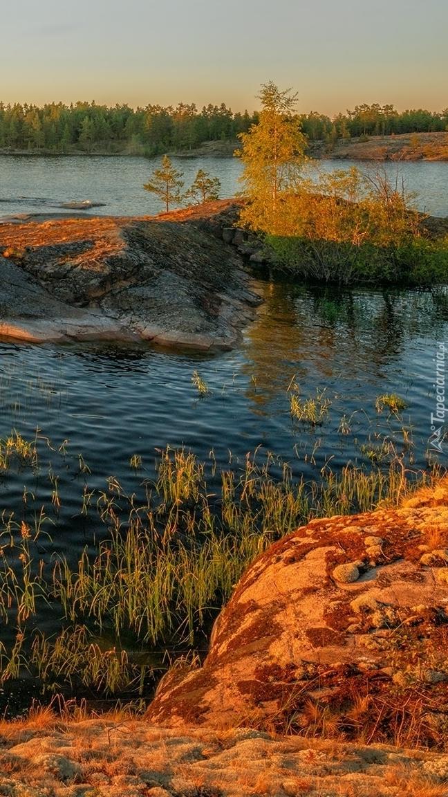 Drzewa na skałach w jeziorze