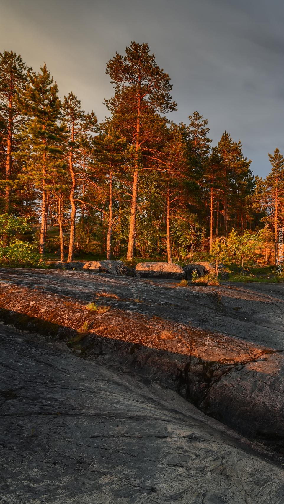 Drzewa na skałach w słońcu
