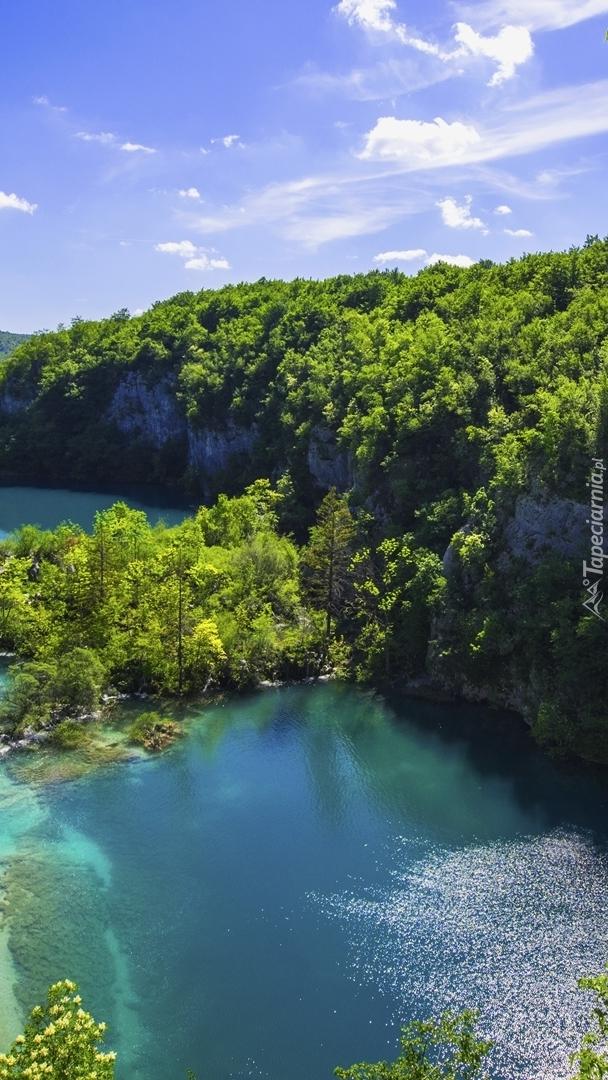 Drzewa na skałach wokół jeziora
