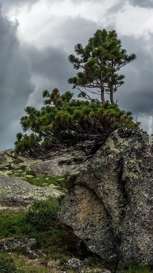 Drzewa na skale na tle chmur