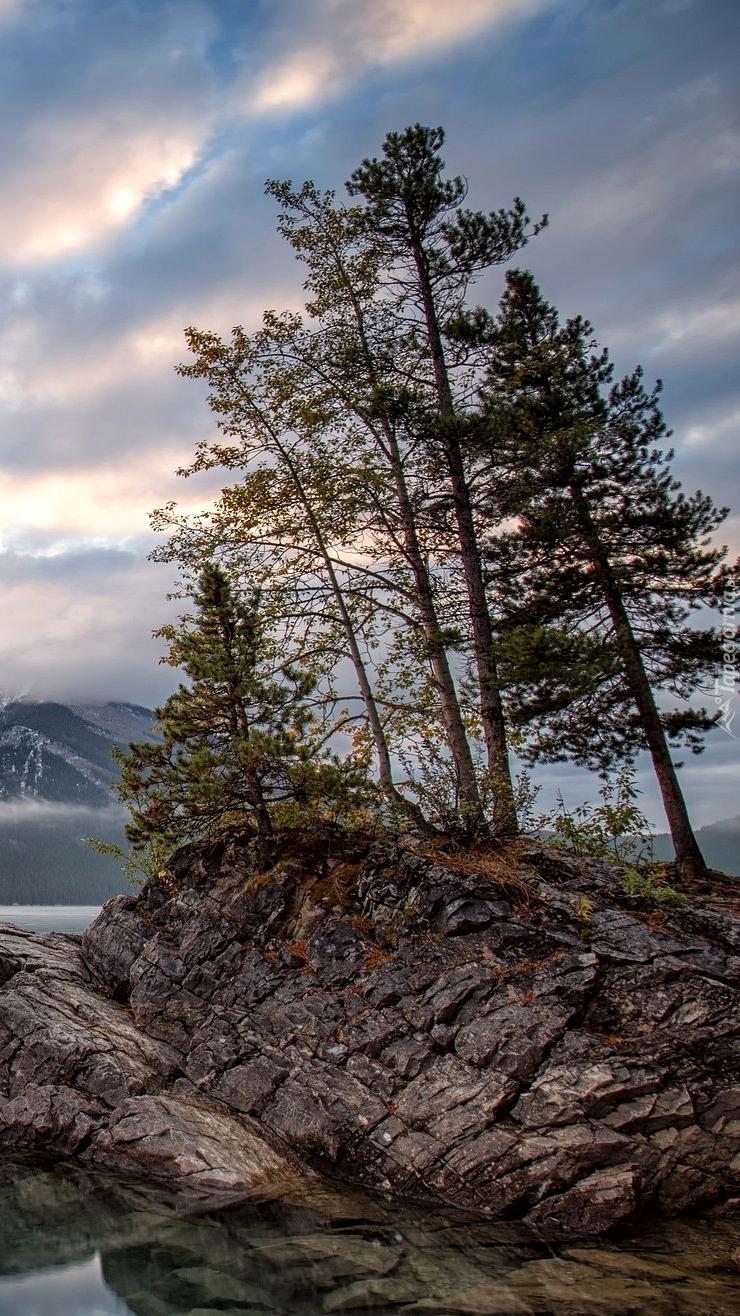 Drzewa na skale nad jeziorem
