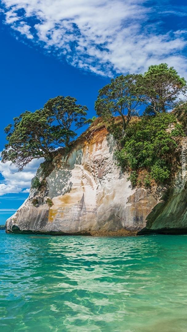 Drzewa na skale w morzu