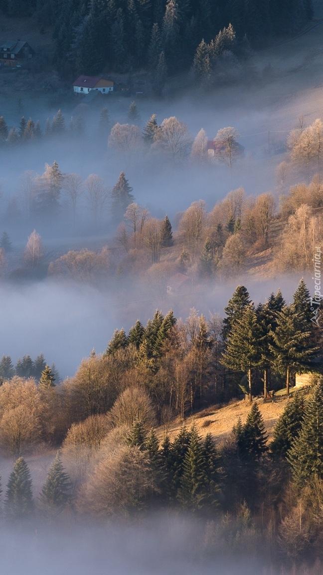 Drzewa na stoku we mgle