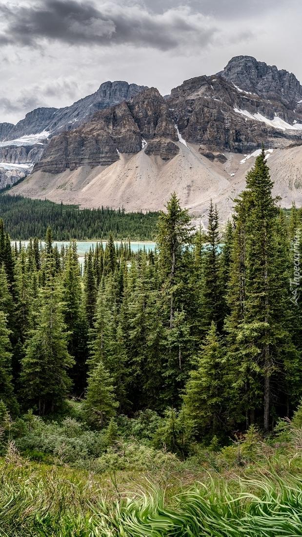 Drzewa na tle gór w Parku Narodowym Banff