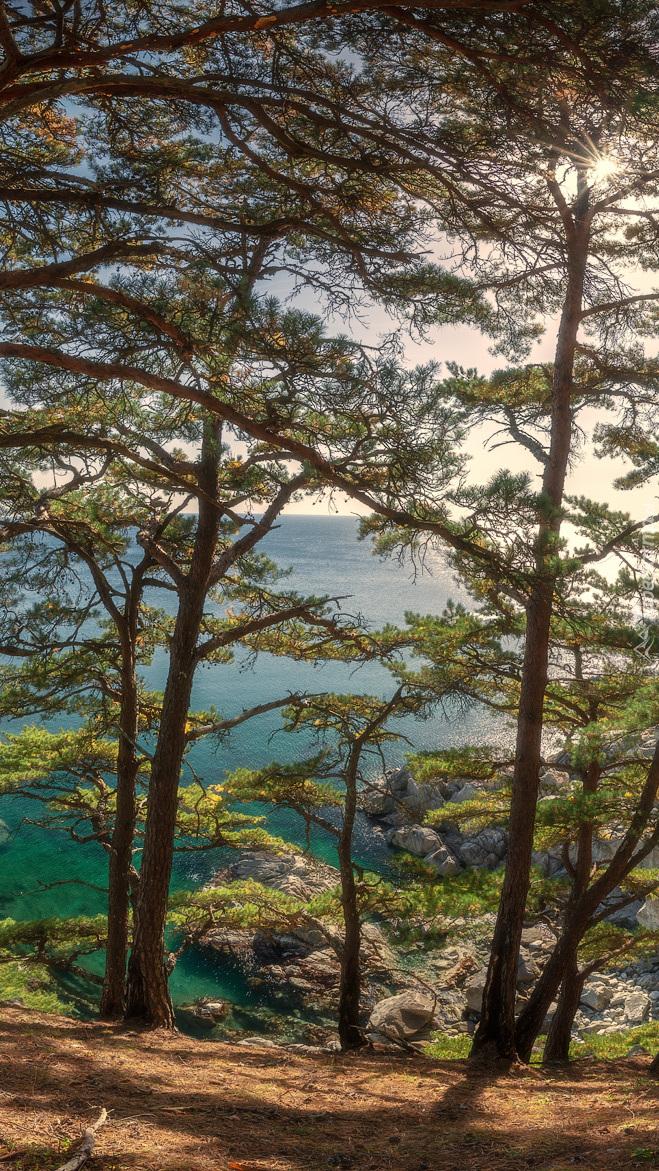 Drzewa na tle morza