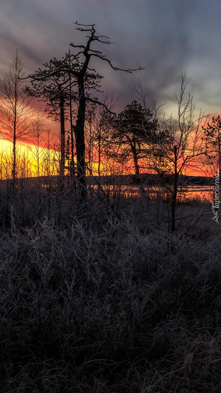 Drzewa na tle zachodzącego słońca