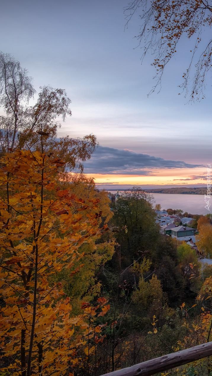 Drzewa na wzgórzu nad miastem Plos