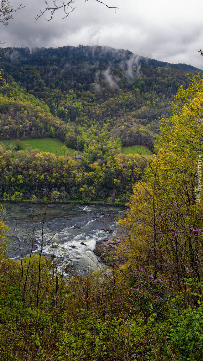 Drzewa na wzgórzu nad rzeką