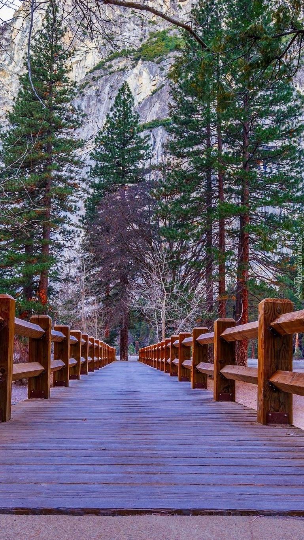 Drzewa nad drewnianym mostem