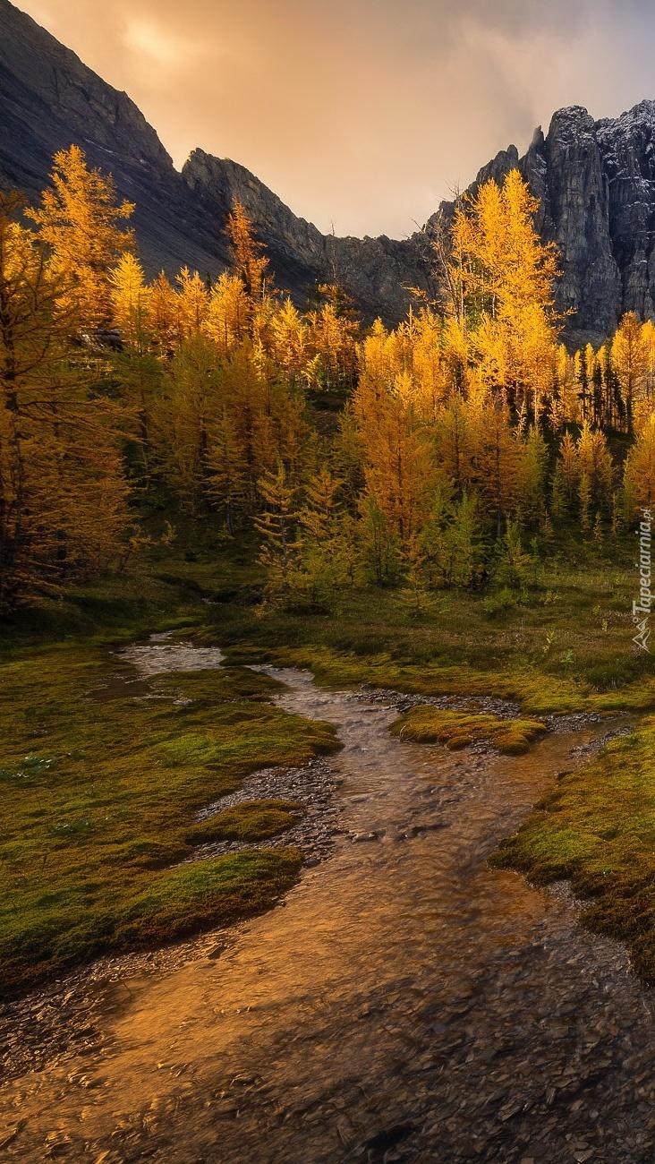 Drzewa nad górskim potokiem