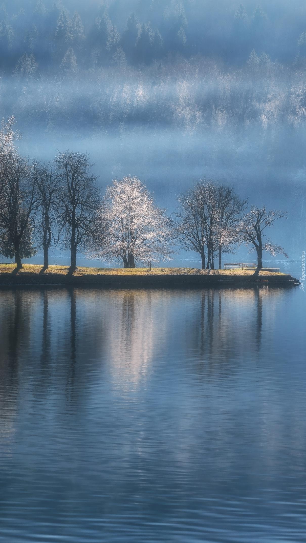 Drzewa nad jeziorem Bohinj