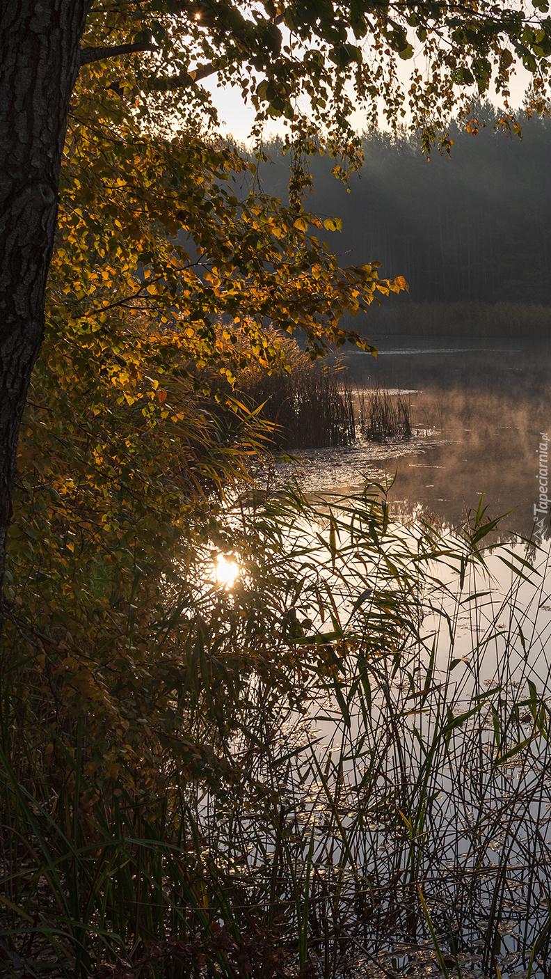 Drzewa nad jeziorem o poranku