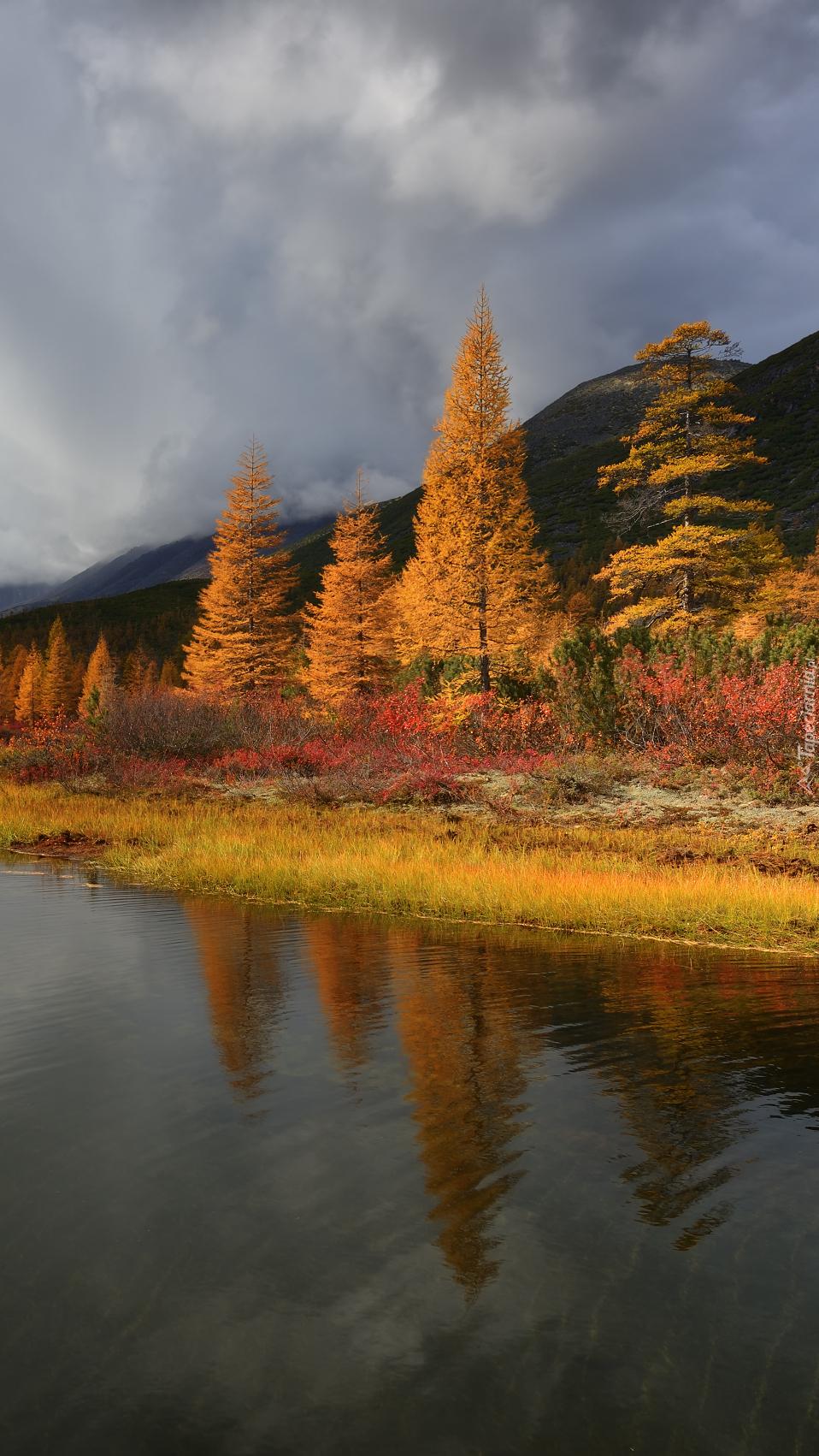 Drzewa nad jeziorem w górach