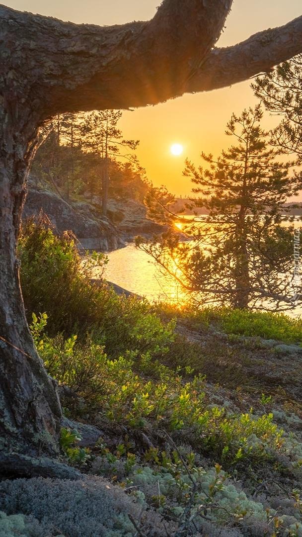 Drzewa nad jeziorem w porannym słońcu