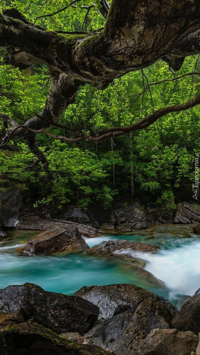 Drzewa nad kamienistą rzeką