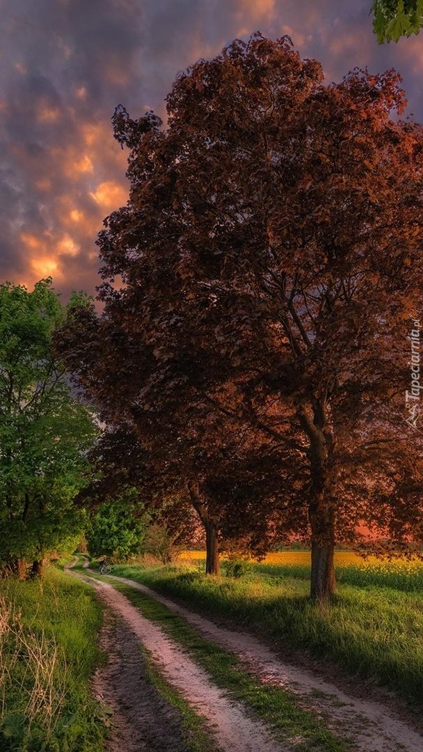 Drzewa nad polną drogą