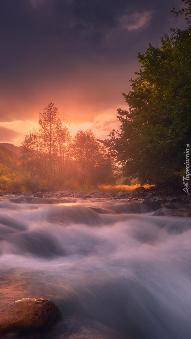 Drzewa nad rwącą rzeką